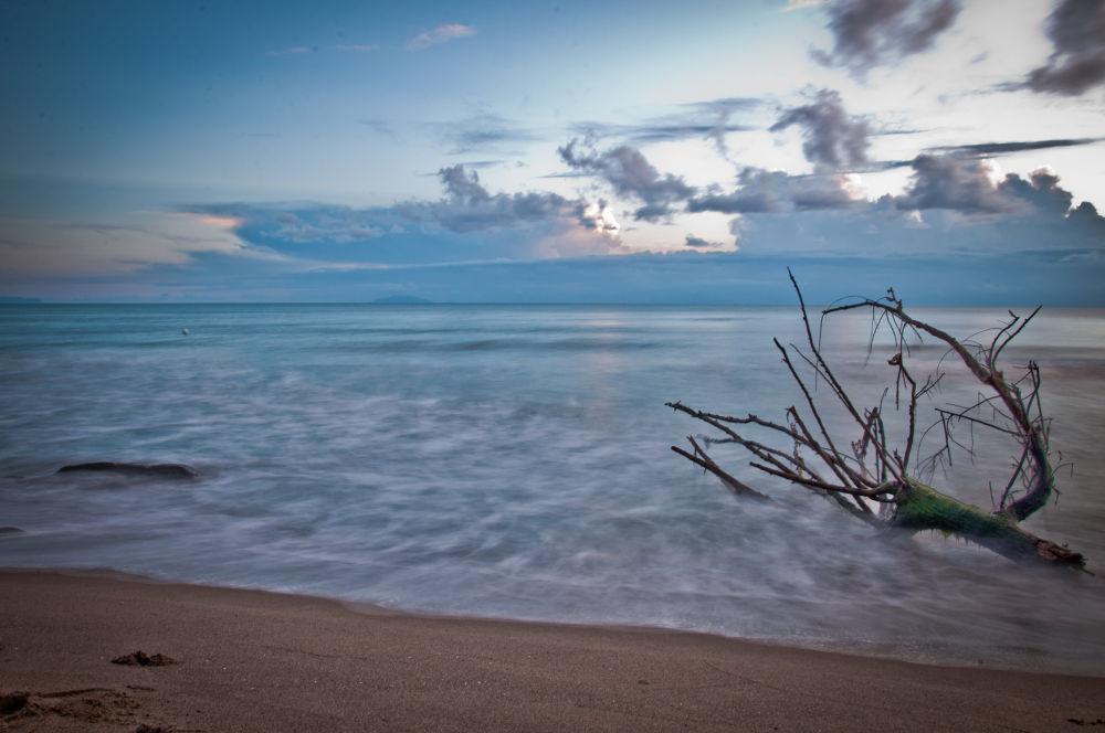 Photo in Landscape #seascape #landscape #tronchi #mare #sunset #spiaggia #beach #long exposure #lunga esposizione
