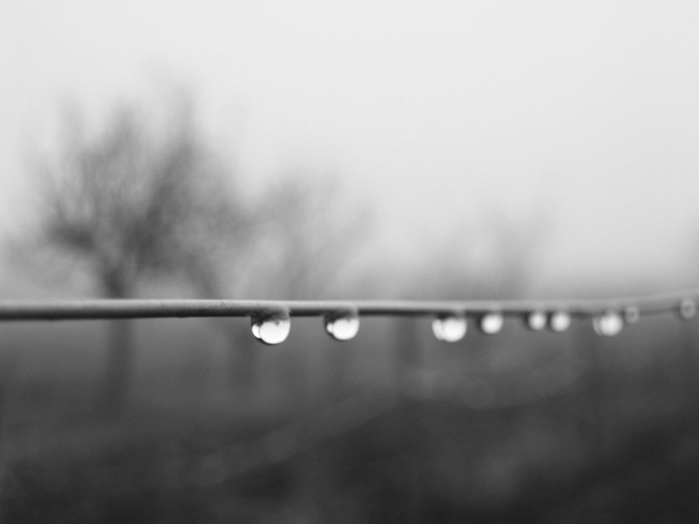 Photo in Nature #mist #blackandwhite #drop