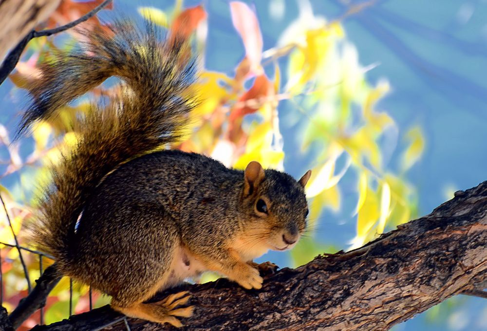 Photo in Animal #squirrel #greenbelt #idaho