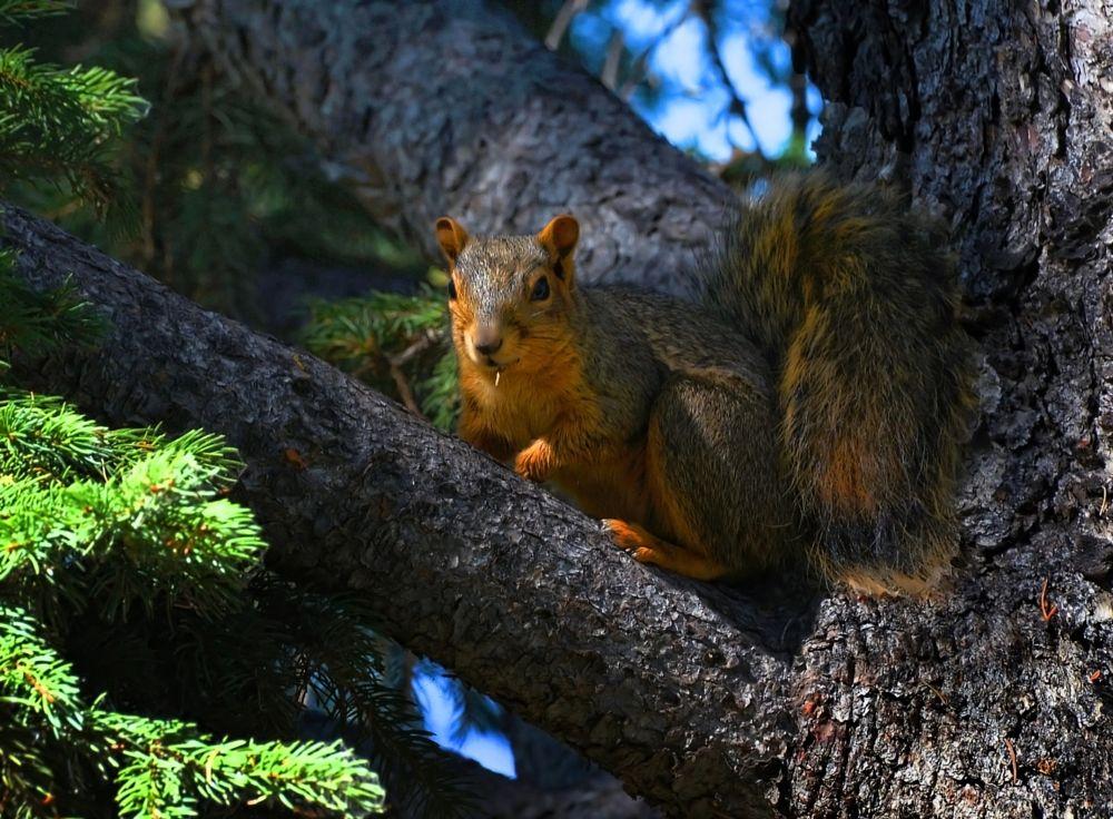 Photo in Animal #squirrel #greenbelt #idaho