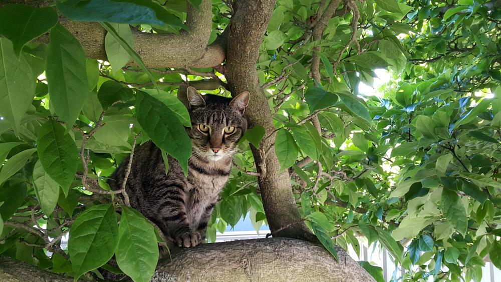 Photo in Animal #pet #cat #cute #kitty #tree #green #nature