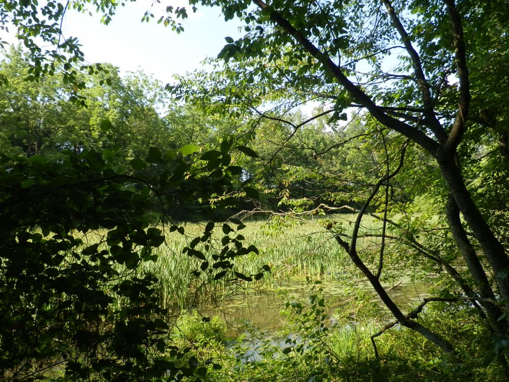 Photo in Nature #swamp #nature #trees #woods