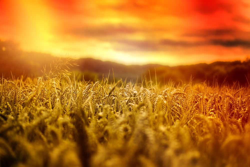 Photo in Fine Art #cornfield #kornfeld #sommer #summer #sun #sonne #leak #nature #natur