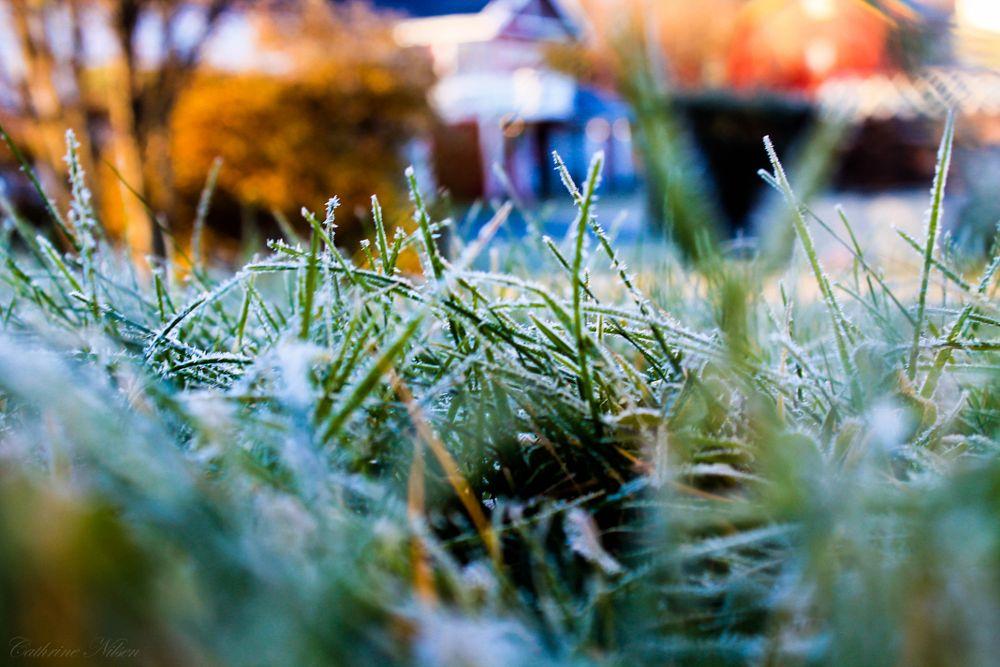 Photo in Nature #frozen #frost #autumn #gras #nature #winter
