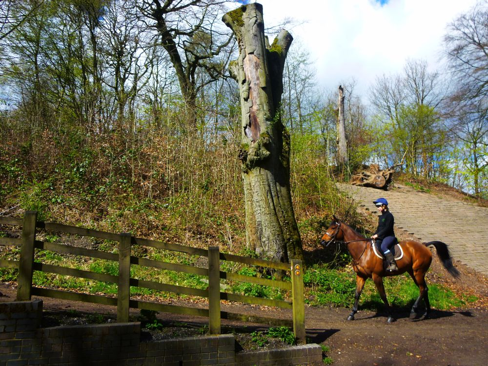 Photo in Animal #woodlands #horse riding #trees #forest
