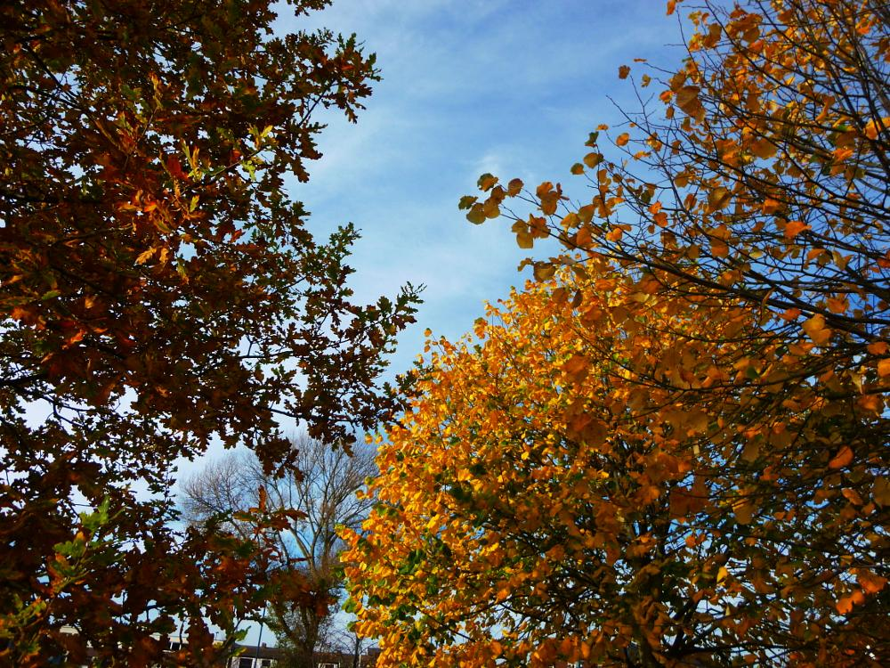 Photo in Nature #tree leaves #countryside #nature #zrnho photos