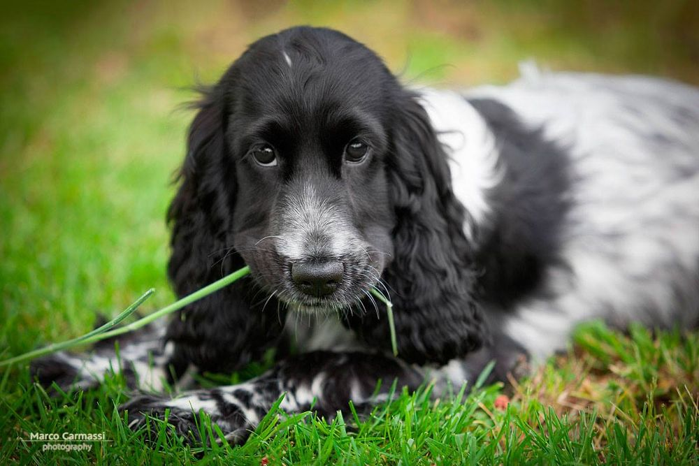 Photo in Animal #animals #dog #photography #picture