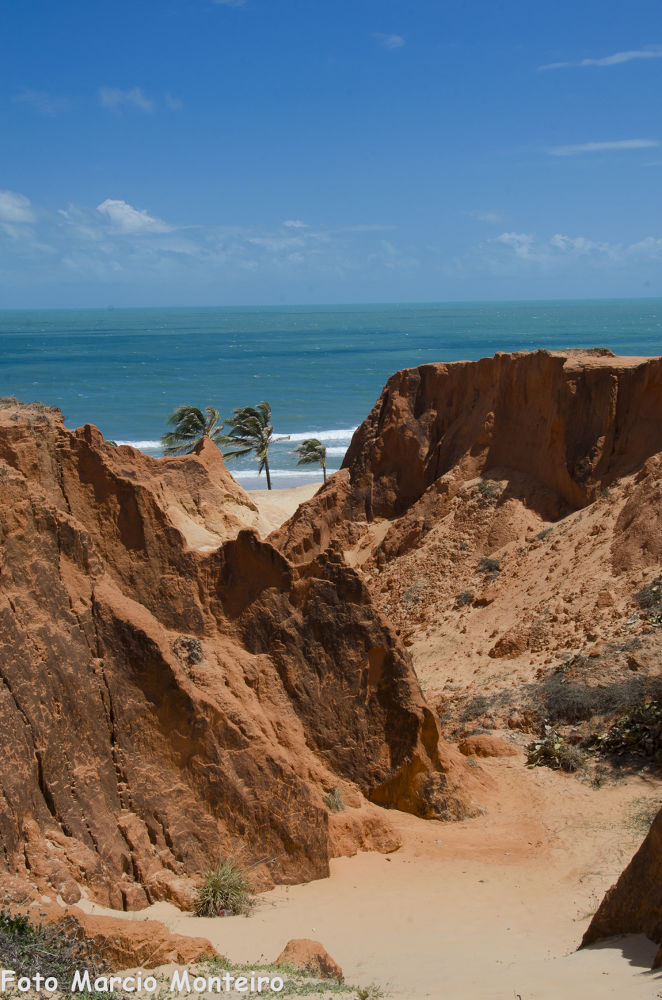 Photo in Nature #beach #sea #nature