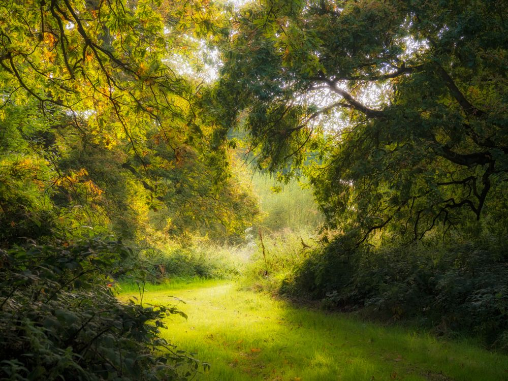 Photo in Nature #nature #woods #woodland #path #autumn