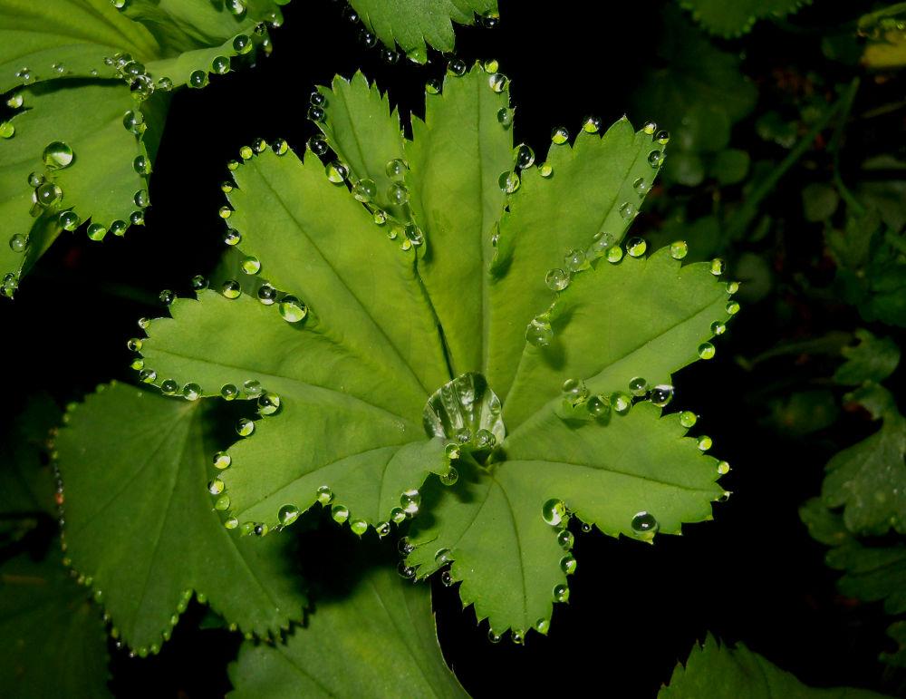 Photo in Macro #drops #water #macro #nature