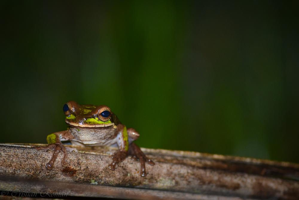 Photo in Animal #frog