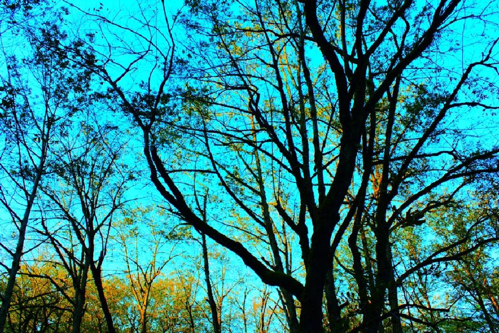 Photo in Nature #sky #blue #trees #jungle #bunches