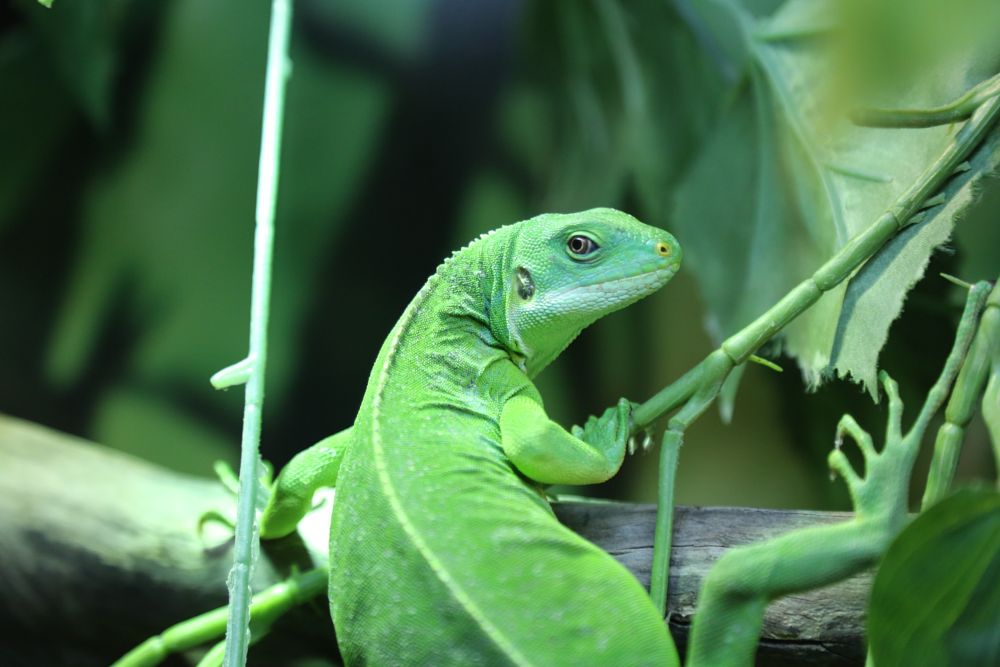 Photo in Animal #chameleon #moscow #russia #zoo