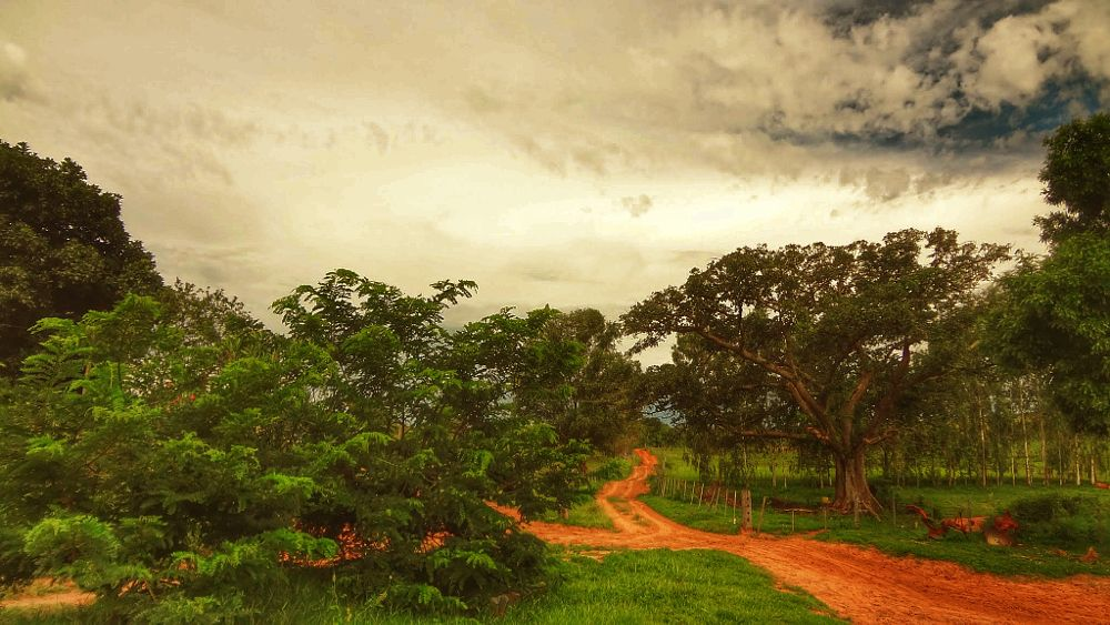 Photo in Landscape #nature #landscape #trees