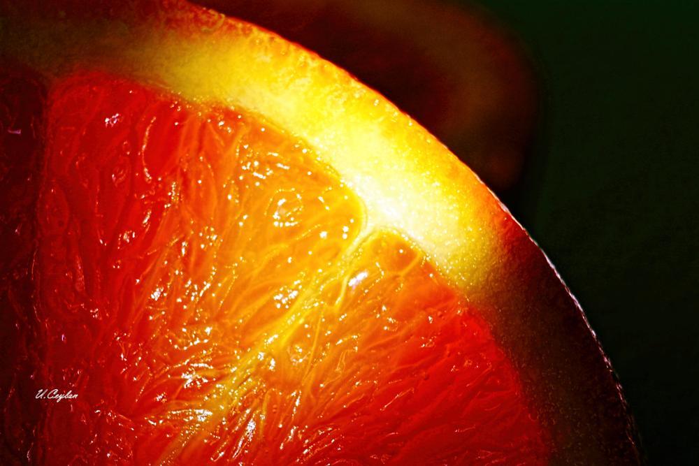 Photo in Macro #macro #orange #close