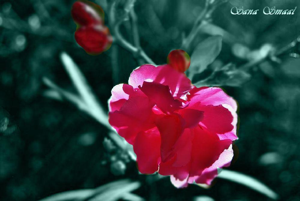 Photo in Nature #flower #hope #dream #light #lightness #world