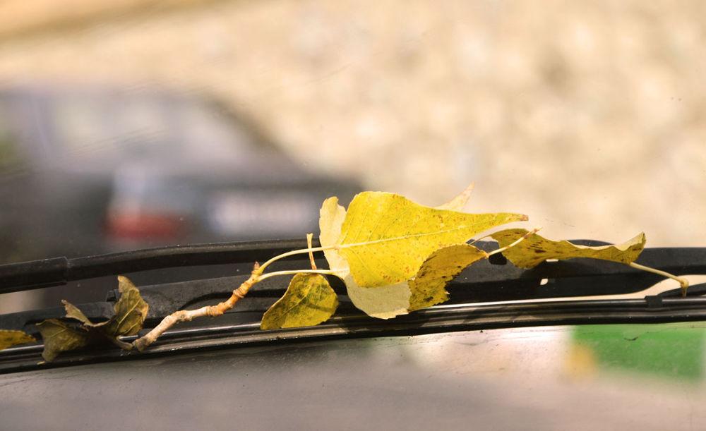 Photo in Nature #wiper #car #driving #fall #leaf