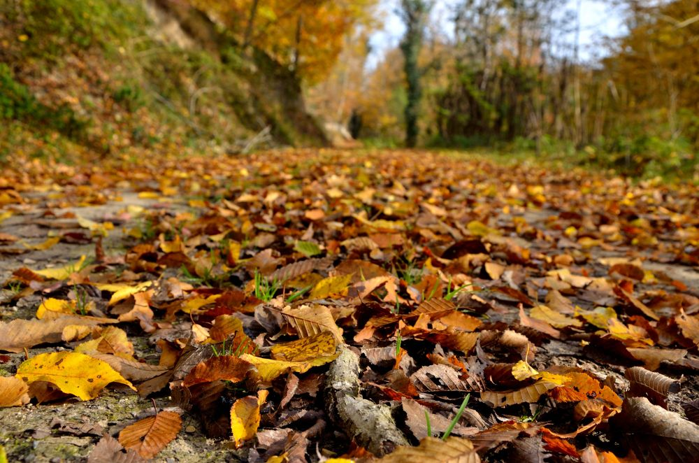 Photo in Nature #leafy ground #ground #leaf #dirt #tree #jungle