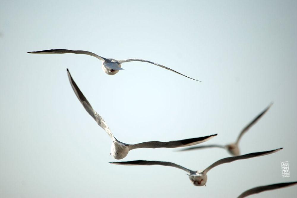 Photo in Animal #musato #seagulls