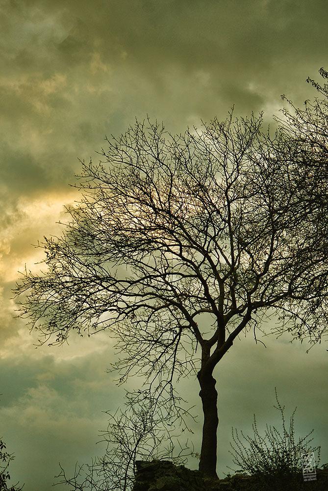Photo in Nature #tree #musato #garden #winter