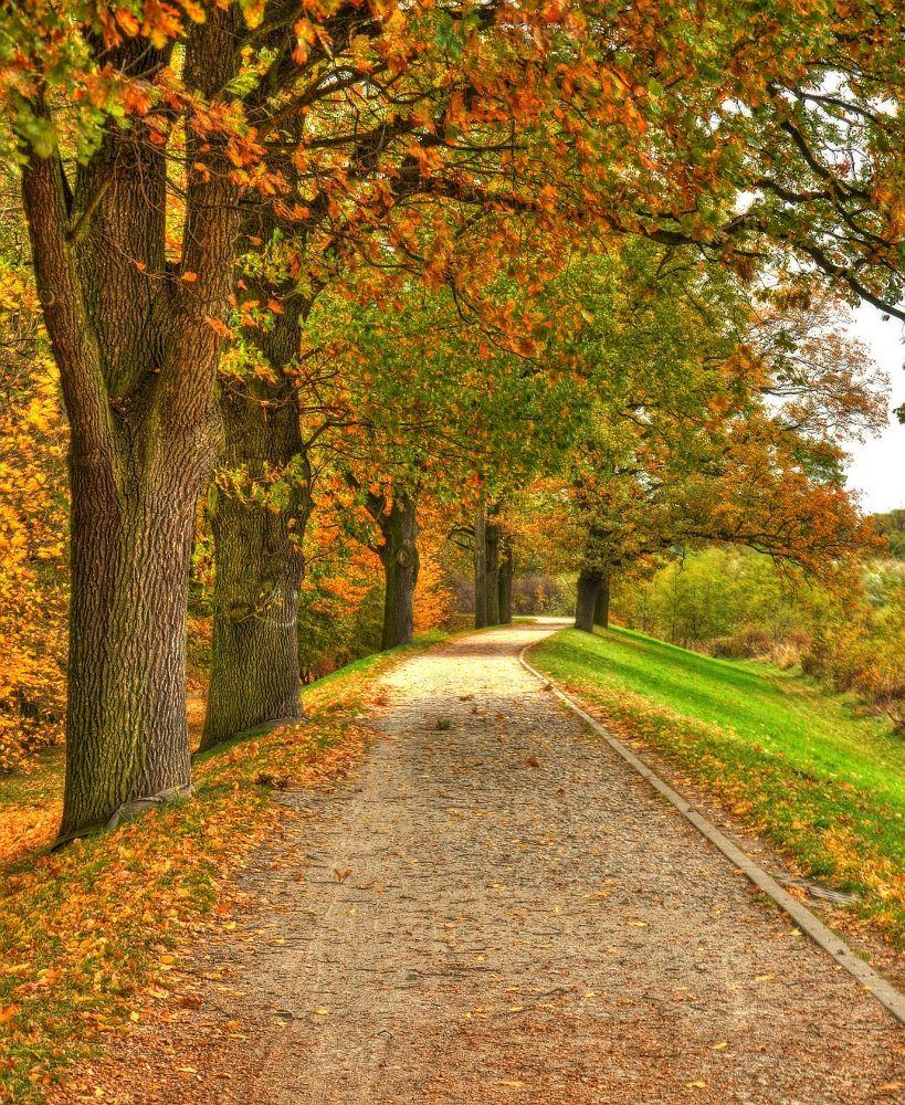 Photo in HDRI #dike #path #trck #walk #trees #autumn #park #wroclaw #poland #hdr