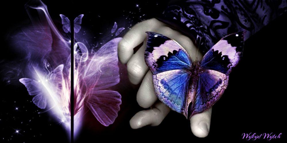 Photo in Fine Art #butterflies #concept #digital #art #deco