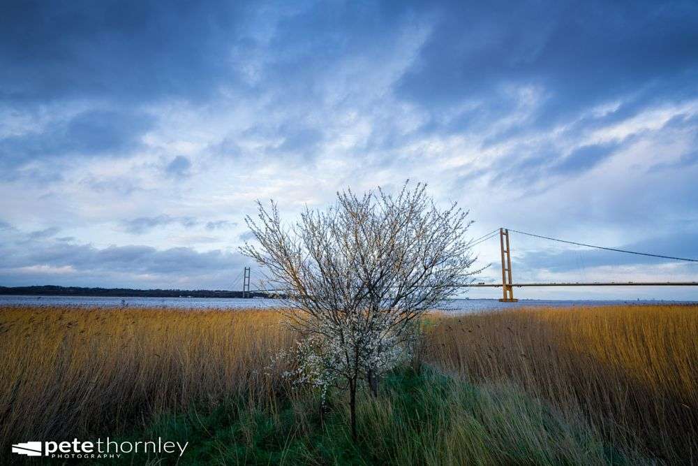 Photo in Landscape #blossom #tree #estuary