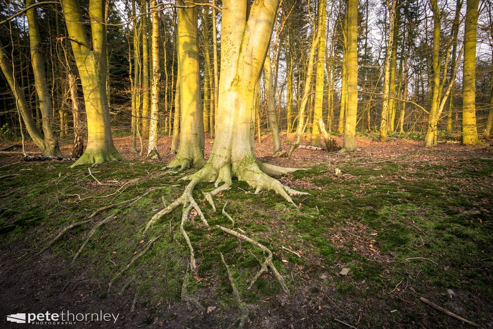 Photo in Landscape #tree #roots #woods
