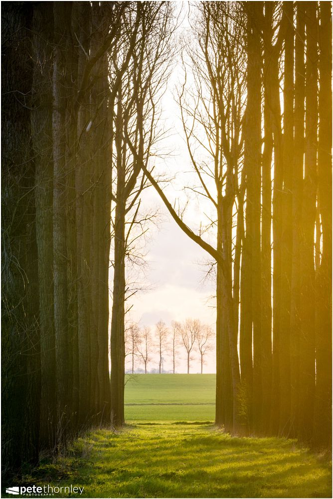 Photo in Landscape #lincolnshire #trees #sunrise #light #shadows #tall