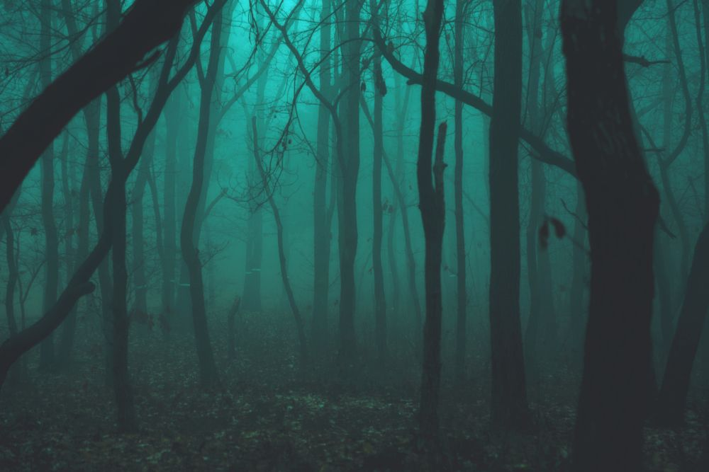 Photo in Fine Art #forest #tree #green #fog
