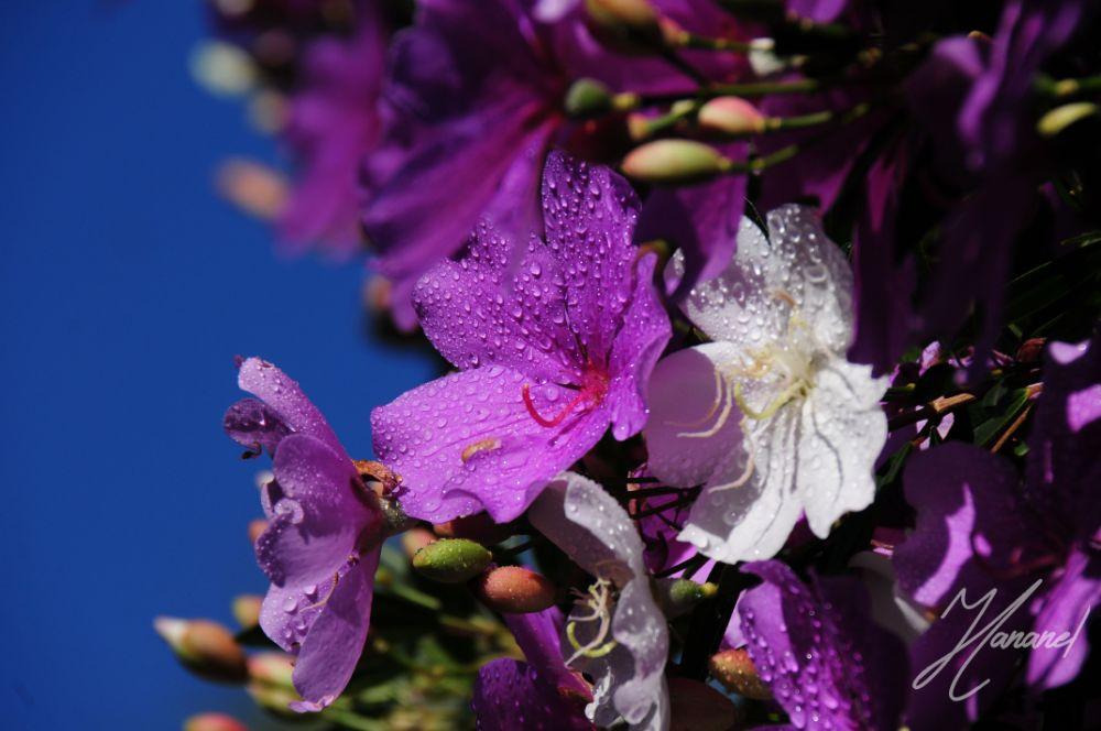 Photo in Nature #flowers #nature #purple