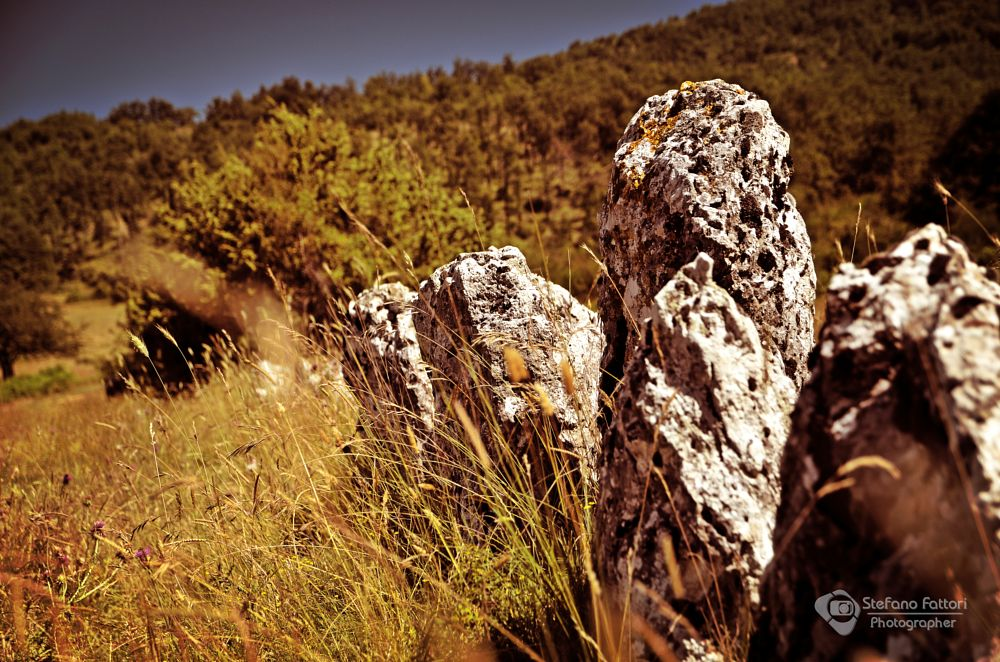 Photo in Nature #stones #vintage #nature #grass #flowers