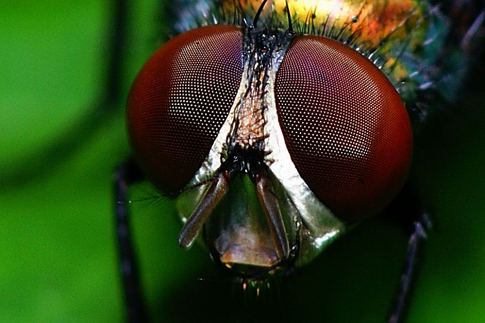 Photo in Macro #fly #insect