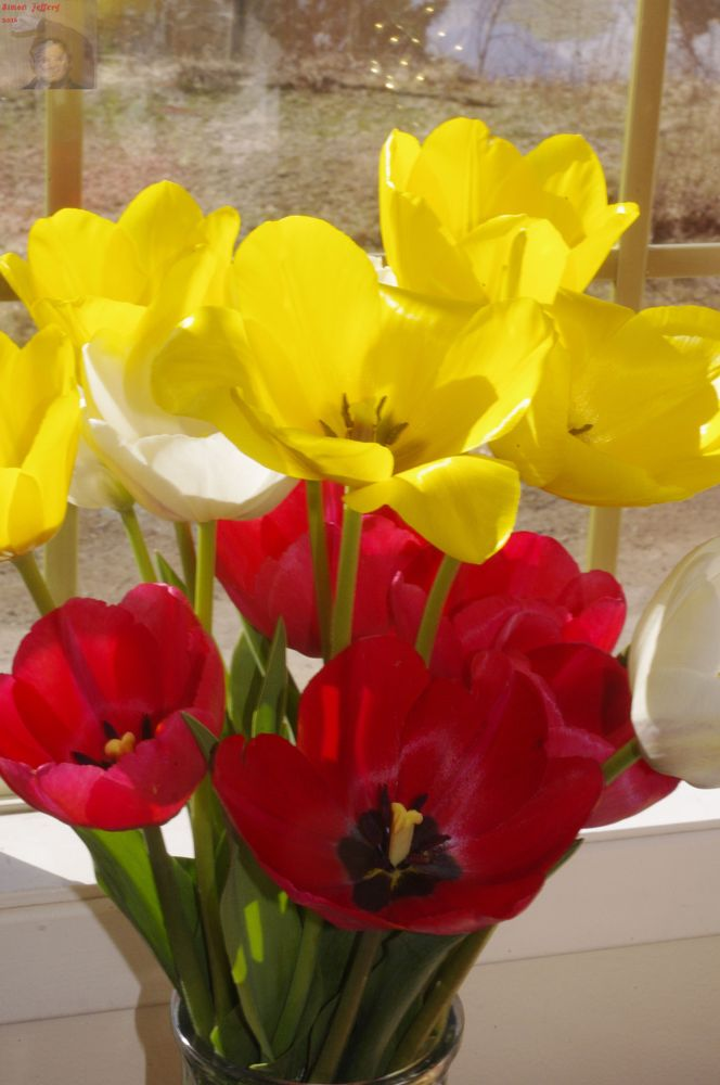 Photo in Still Life #tulips #flowers #red