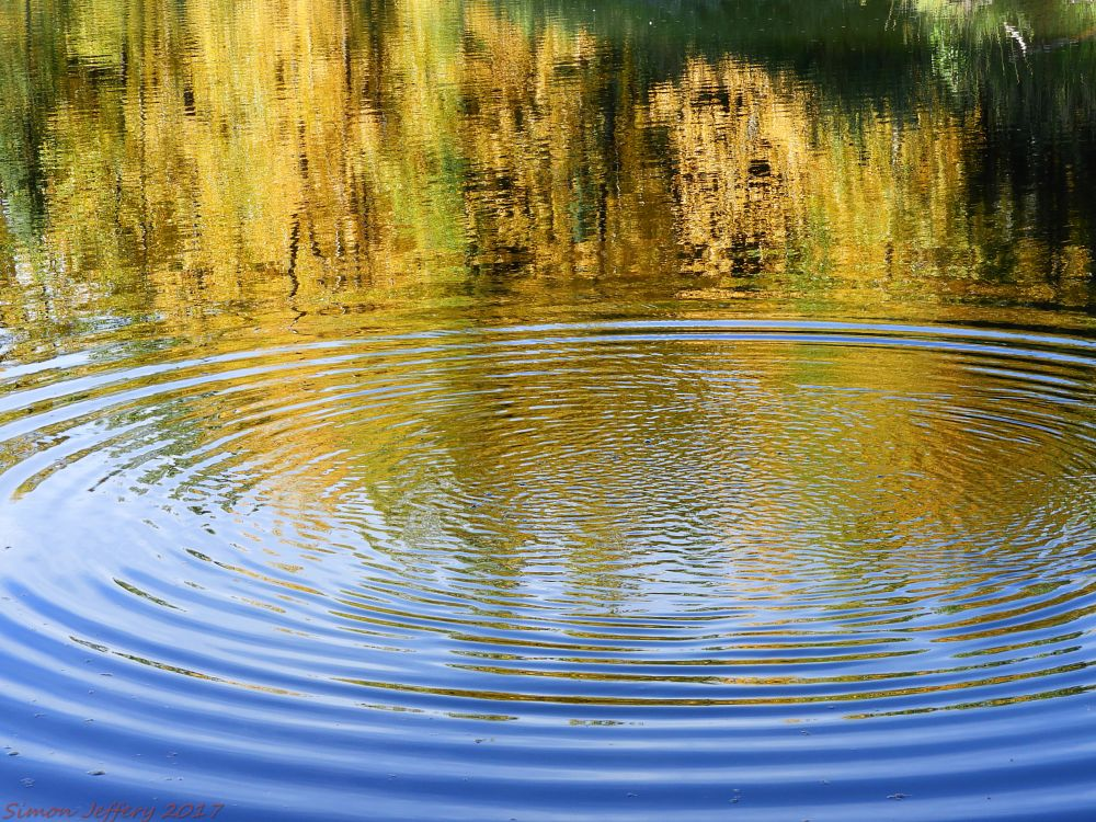 Photo in Nature #ripple #fall_colours #river
