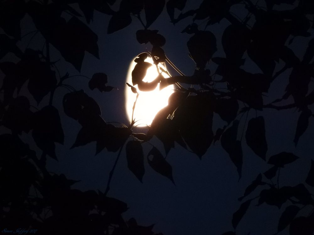 Photo in Nature #leaves #moon #silhouette
