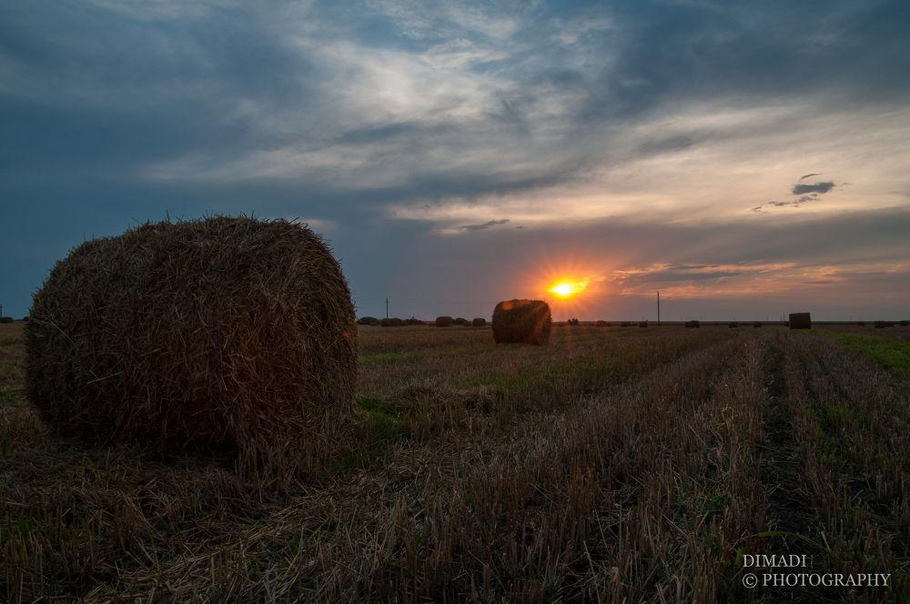 Photo in Random #sun #sunset #field
