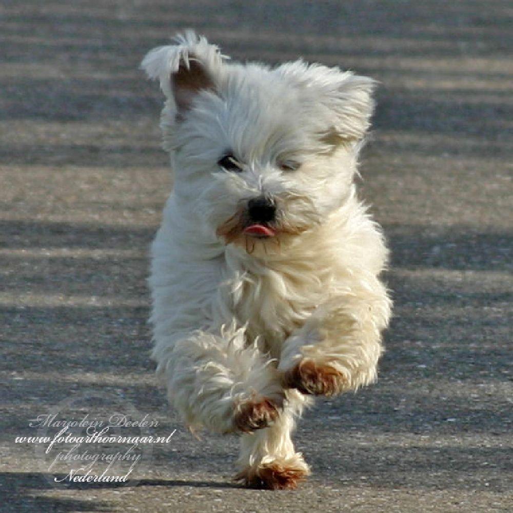Photo in Animal #hond #dog #animal #dieren #pet #huisdier