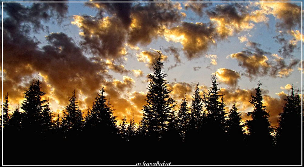Photo in Random #forest #clouds #sunset #cloud #sky #nature #natural