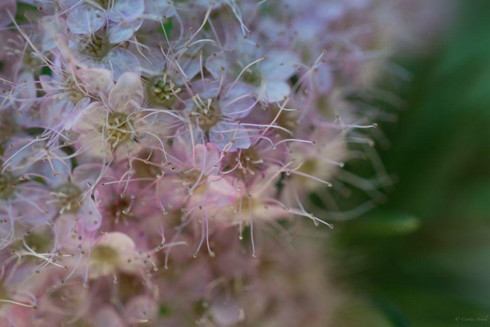 Photo in Macro #flowers #nature #beauty #bokeh #green #plant #summer