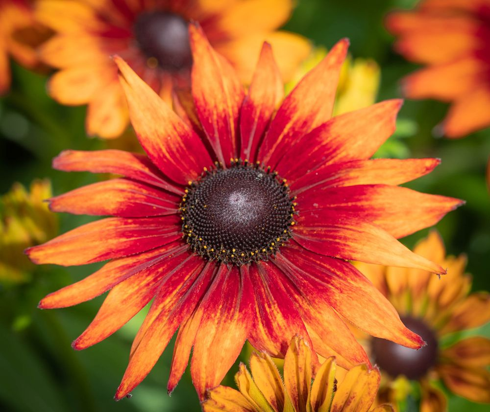 Photo in Macro #flower #floral #nature #natural #orange #macro #colorful #summer #garden #park #solo #shine