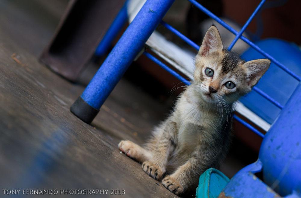 Photo in Random #cat #kitten #sri lanka #nature #pets