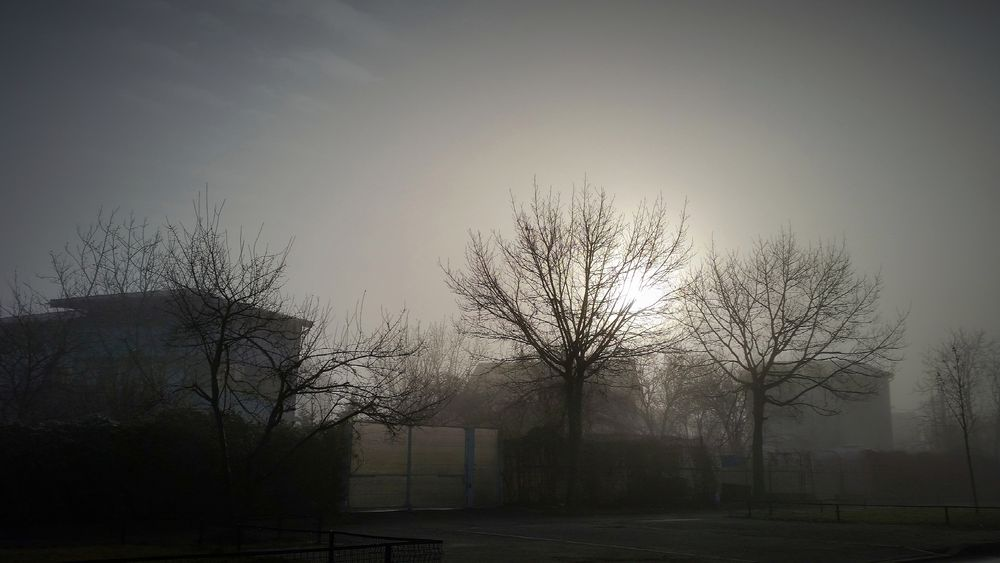 Photo in Street Photography #fog #dimming #dim light #nature #trees #sunny #monochrome #daytime #daylight
