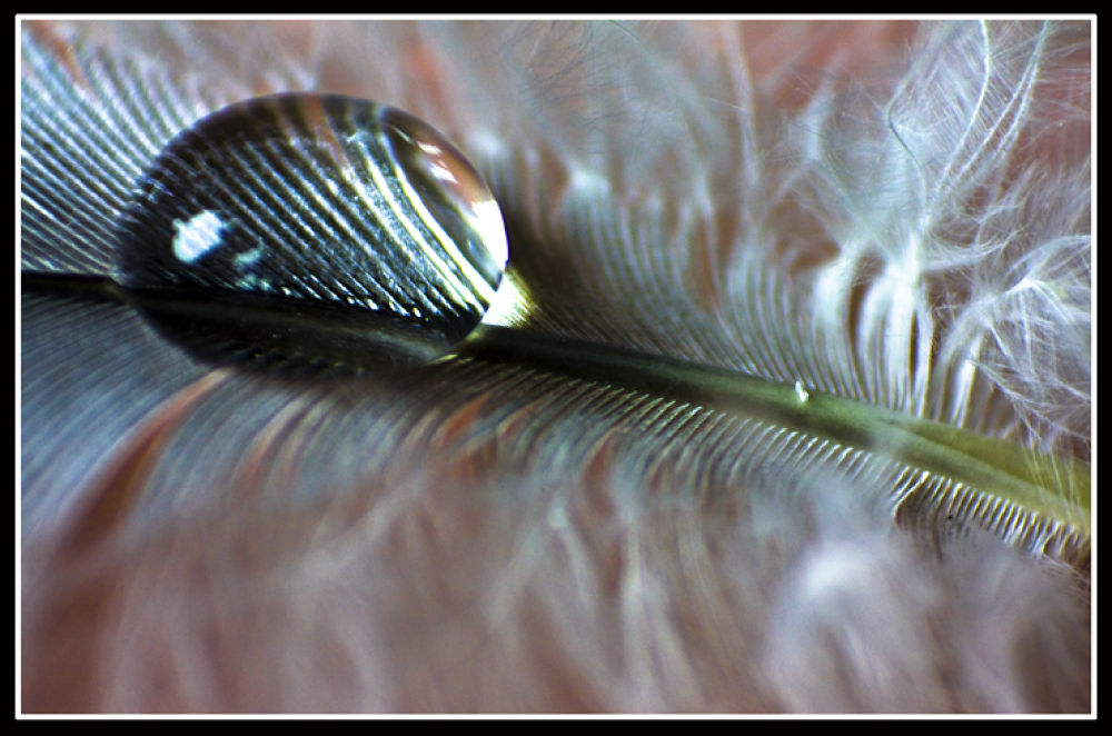 Photo in Macro #drop