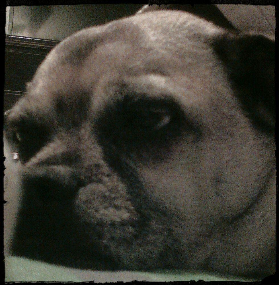 Photo in Animal #my #baby #sweet #heart #dog #friend #loyal #loving #trusting #amazing