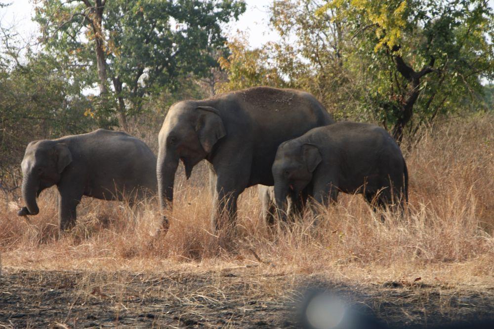 Photo in Travel #elefant
