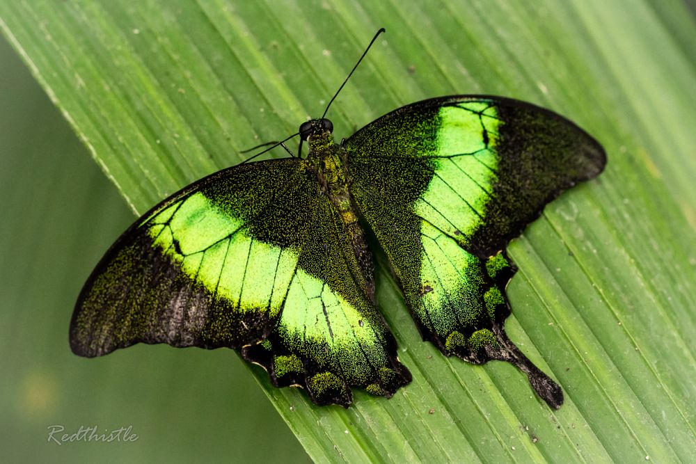 Photo in Nature #papiliorama #kerzers #butterfly #closeup