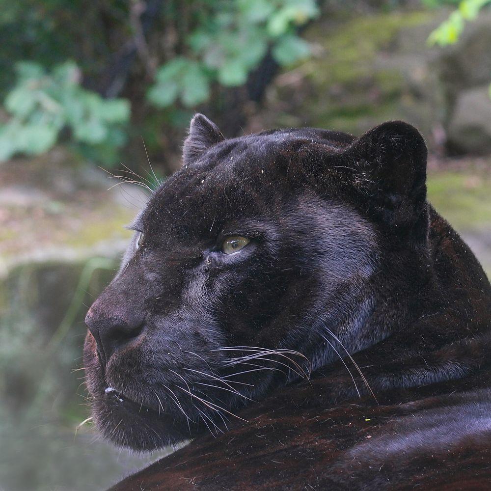 Photo in Random #zoo #animal