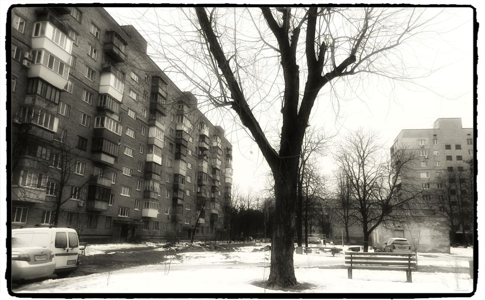 Photo in Black and White #winter #tree #yard #houses #cars #snow