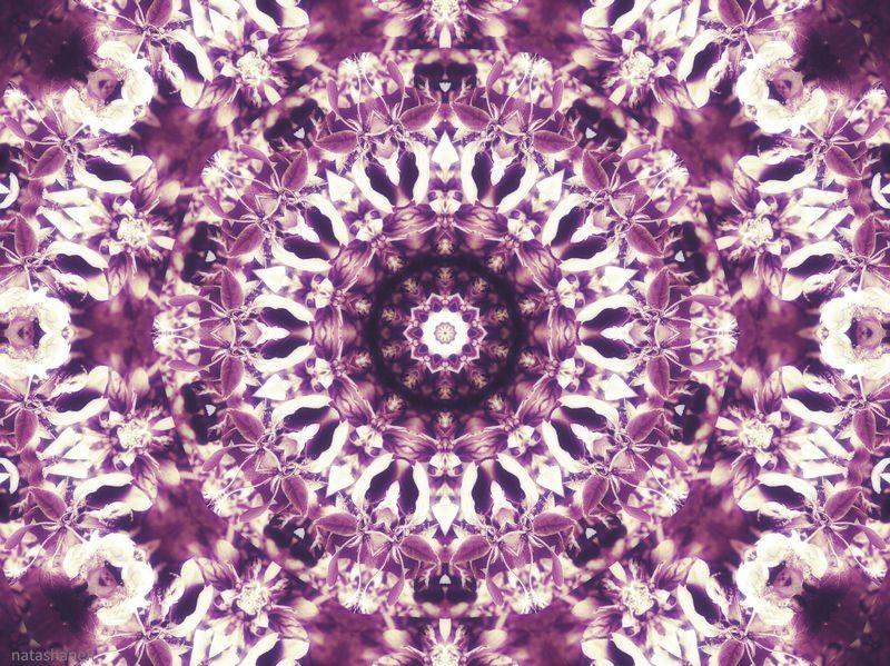 Photo in Abstract #lilac mandala #kaleidoscopes #fractal art